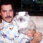 Freddie Mercury y su gato